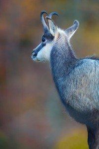 JOWA-Mammals- (05)