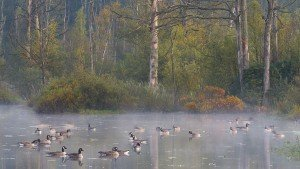 JOWA-birds (04)