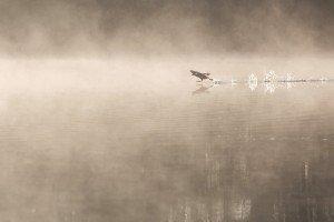 JOWA-birds (07)