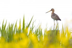 JOWA-birds (09)