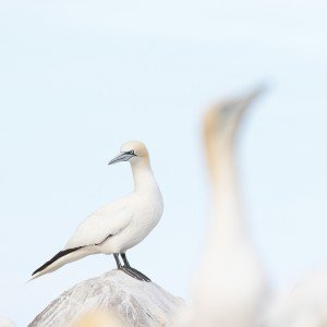 JOWA-birds (22)