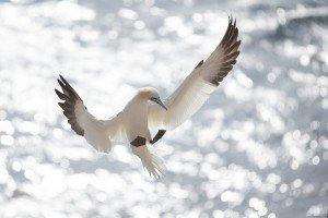JOWA-birds (25)