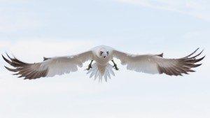 JOWA-birds (28)