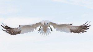 JOWA-birds (28b)