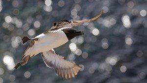 JOWA-birds (30)