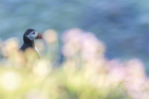 JOWA-birds (40)