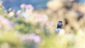 JOWA-birds (41)