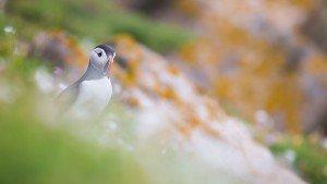 JOWA-birds (43)