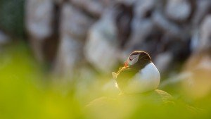 JOWA-birds (44)