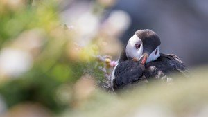 JOWA-birds (48)