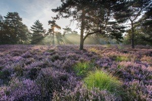JOWA-landscape (09)