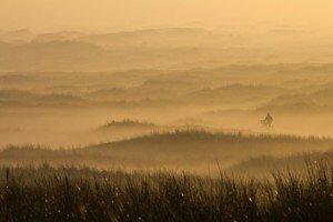 JOWA-landscape (23)