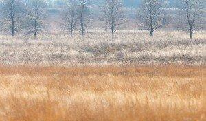 JOWA-landscape (27)