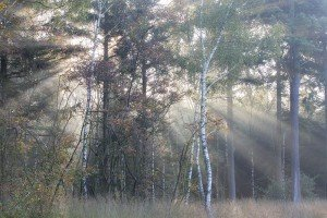 JOWA-trees (03)