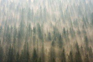 JOWA-trees (04)