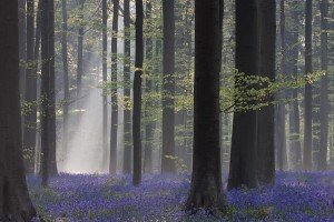 JOWA-trees (06)