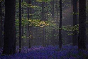 JOWA-trees (07)