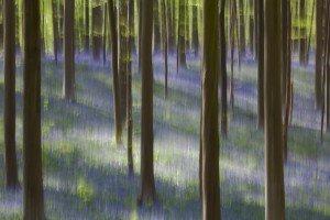 JOWA-trees (09)