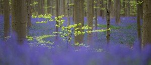 JOWA-trees (14)