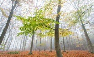 JOWA-trees (15)