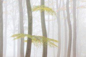 JOWA-trees (16)