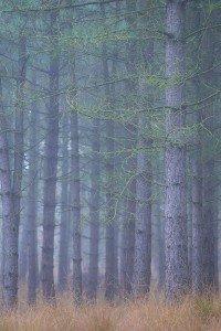 JOWA-trees (17)