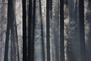 JOWA-trees (23)